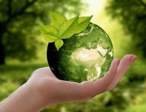 Prężne działania ekologiczne firmy Wiśniowski i Fundacji Horyzont360